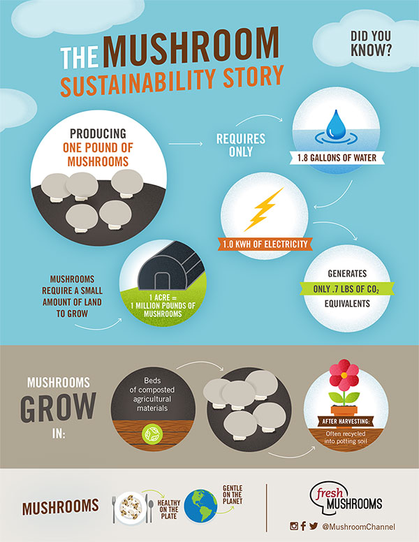 The Mushroom Sustainability Study Infographic